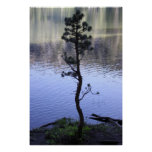 Reflections- Tree Poster