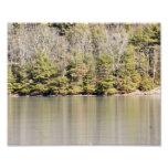 Reflective Pines 10x8 Photographic Print
