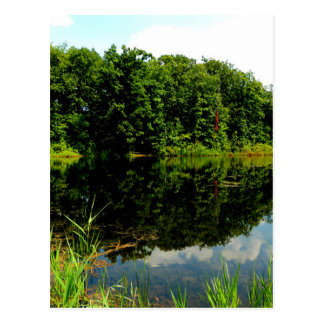 Reflective Ponds Postcard