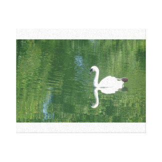 Reflective Swan Canvas