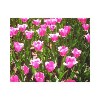 Refreshing Pink Tulip Garden Canvas Print