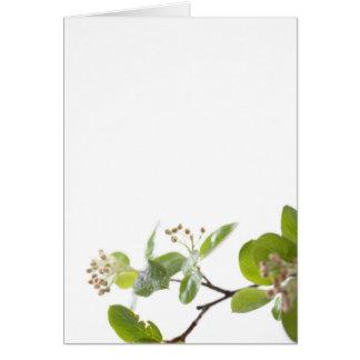 Refreshing Twig Greeting Card