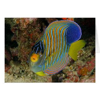 Regal angelfish card