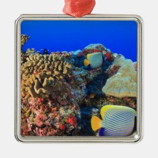 Regal Angelfish Pygoplites diacanthus), Silver-Colored Square Decoration