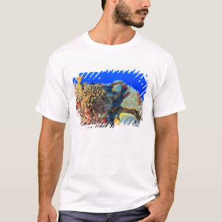 Regal Angelfish Pygoplites diacanthus), T-Shirt