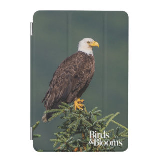 Regal Bald Eagle iPad Mini Cover