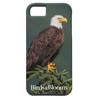 Regal Bald Eagle iPhone 5 Case