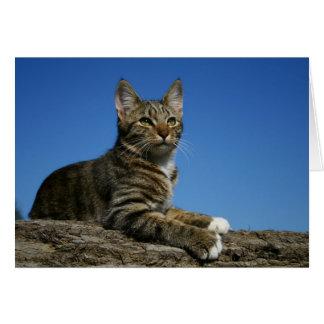 [Regal Cat Portrait] [Blank Inside] Card