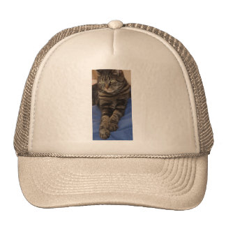 Regal Dave Cap