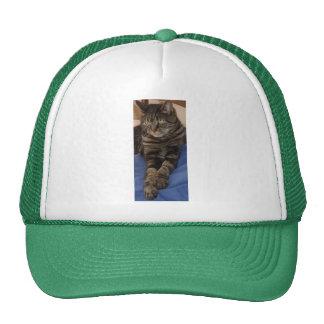 Regal Dave Trucker Hat