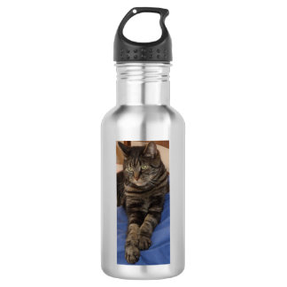 Regal Dave Water Bottle (532 ml), Stainless Steel 532 Ml Water Bottle