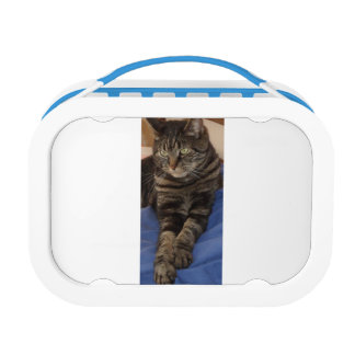 Regal Dave Yubo Lunchbox, Blue Lunch Boxes