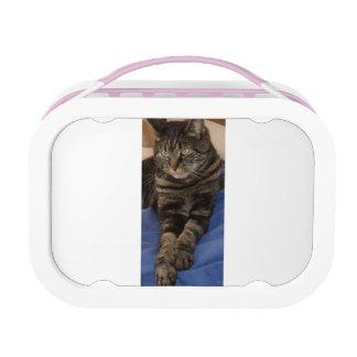 Regal Dave Yubo Lunchbox, Pink Lunchbox