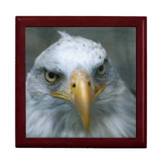 Regal Eagle Face Large Square Gift Box