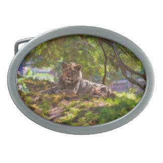 REGAL LION BELT BUCKLES