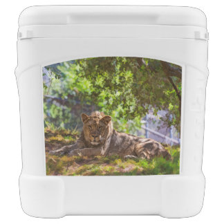 REGAL LION COOLER