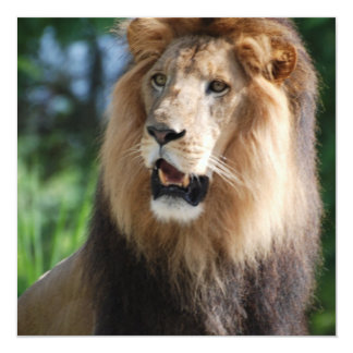 Regal Lion Invitations