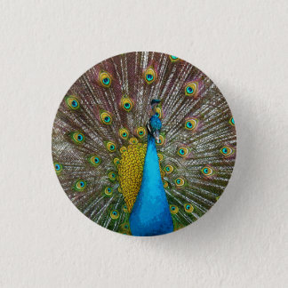 Regal Peacock with Teal and Gold Tail Feathers 3 Cm Round Badge