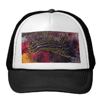 Regal Sea Goddess Nudibranch Felimare picta Mesh Hats