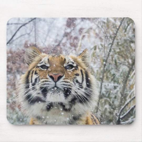 Regal Tiger in Snow Mouse Mat