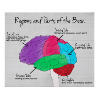 Regions and Parts of the Brain Poster