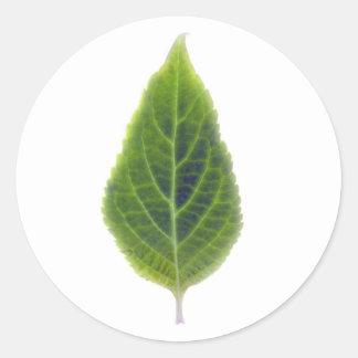 Regular Salvia Divinorum Sticker