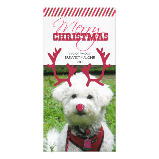Reindeer Antler & Red Nose Pet Christmas! Customised Photo Card