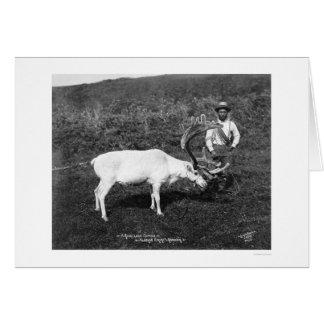 Reindeer Eskimo Alaska 1920 Greeting Card