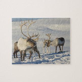 Reindeer Game Puzzle