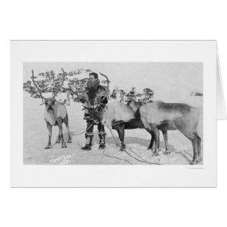 Reindeer Herd Alaska 1909 Greeting Card