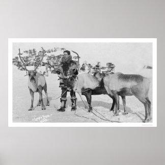 Reindeer Herd Alaska 1909 Posters