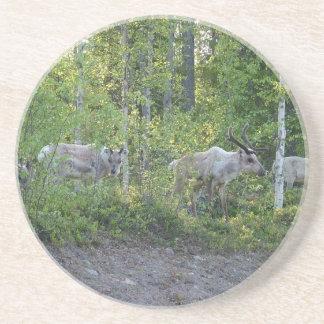 Reindeer in Lapland coaster