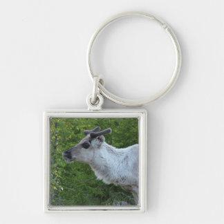 Reindeer in Lapland key chain