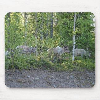 Reindeer in Lapland mousepad