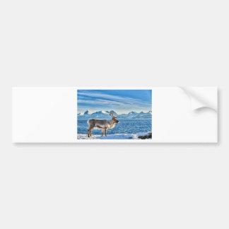 Reindeer in snow covered landscape at sea bumper sticker