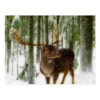 Reindeer in Snow Postcard