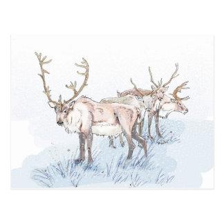 Reindeer in the Snow Print Postcard