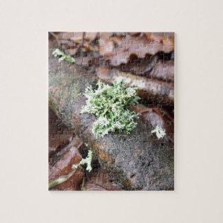 Reindeer Moss Lichen On Tree Branch Jigsaw Puzzle
