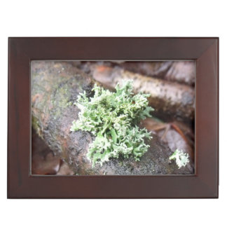 Reindeer Moss Lichen On Tree Branch Keepsake Box
