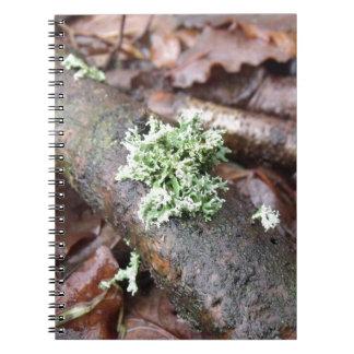 Reindeer Moss Lichen On Tree Branch Notebook