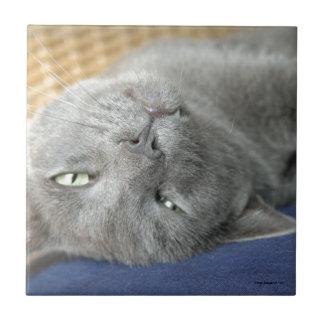 Relax! Grey Purring Cat Ceramic Tile