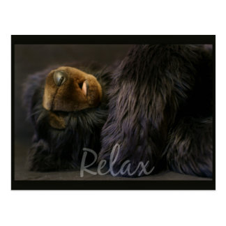 Relax Post Card With Sleeping Bear
