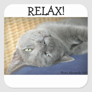 Relax! Square Sticker with Grey Purring Cat