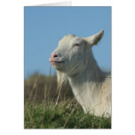 relaxed goat greeting cards