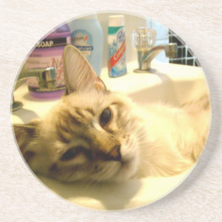 relaxed kitty Coaster