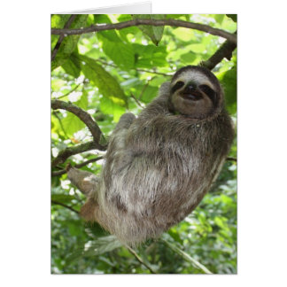Relaxed Sloth in Nature Card