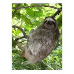 Relaxed Sloth in Nature Post Card