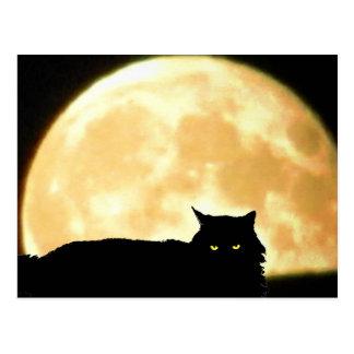 Relaxing Black Cat and Full Moon Postcard