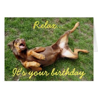 Relaxing doberman dog card