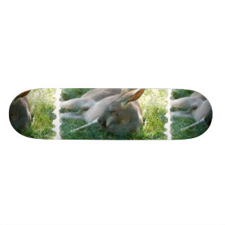 Relaxing Kangaroo Skateboard